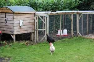 mullingar montessori garden play area with chicken coup